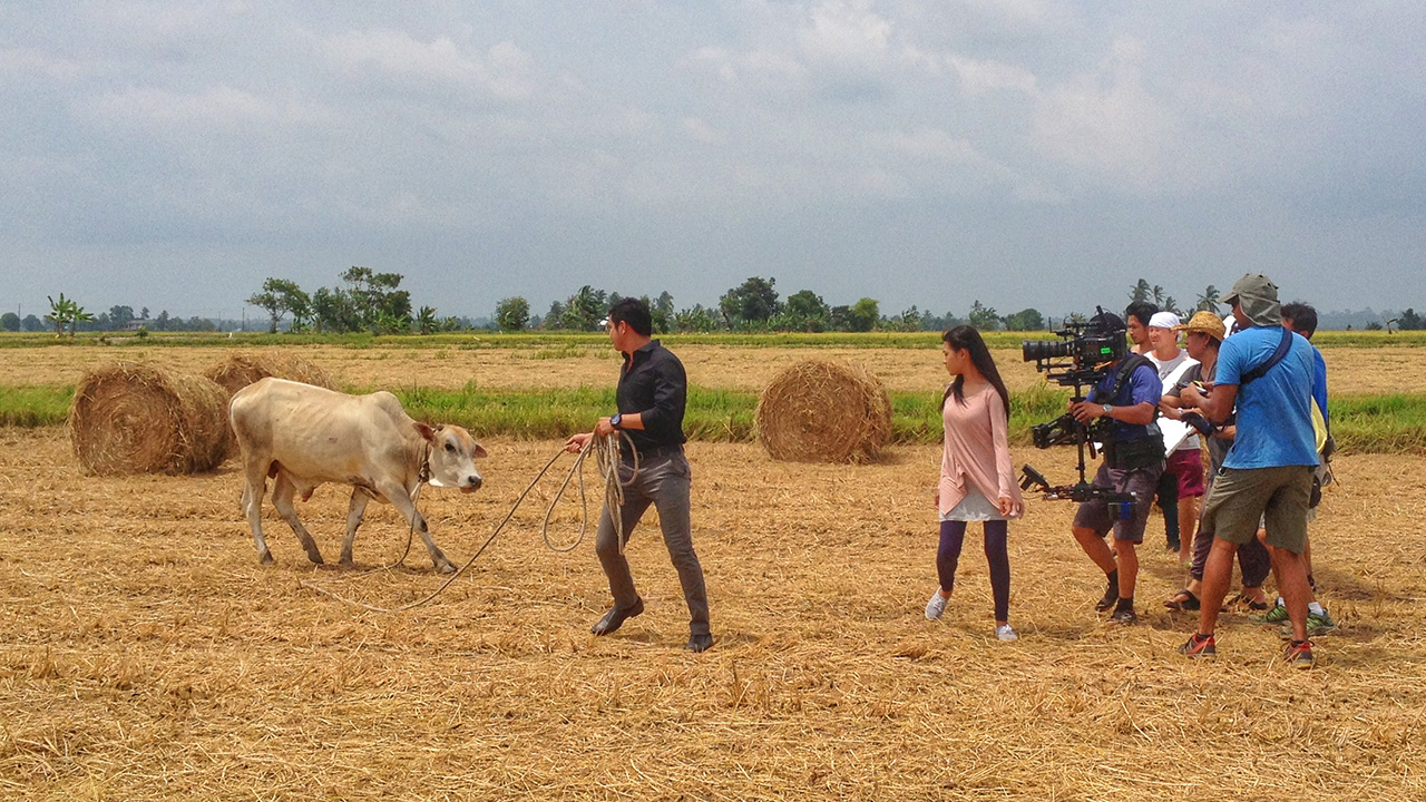 We had a bull on set and it came with an attitude but it never rushed the Steadicam operator.