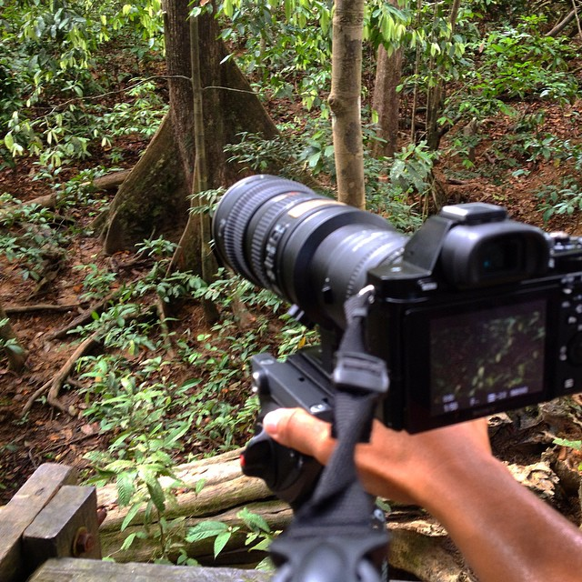 Today's office- looking out for Bornean sun bears #documentary #wildlife #filmmaking #sonya7s #nikon #nikon70200
