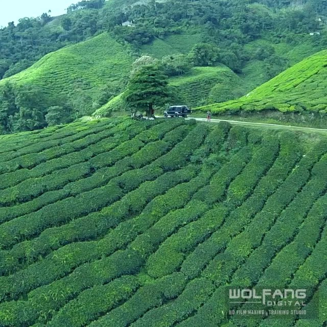 Enjoy the flight over rolling hills of tea. Now you know where tea come from. Full video here http://www.wolfangdigital.com/aerial-video-soar-tea-hills/ #tea #dronevideo #dronevideos #aerialvideo #aerialvideos #gopro #goprohero3 #drone #phantom2 #aerialshots #droneoftheday #dronelife #hero3 #djiglobal