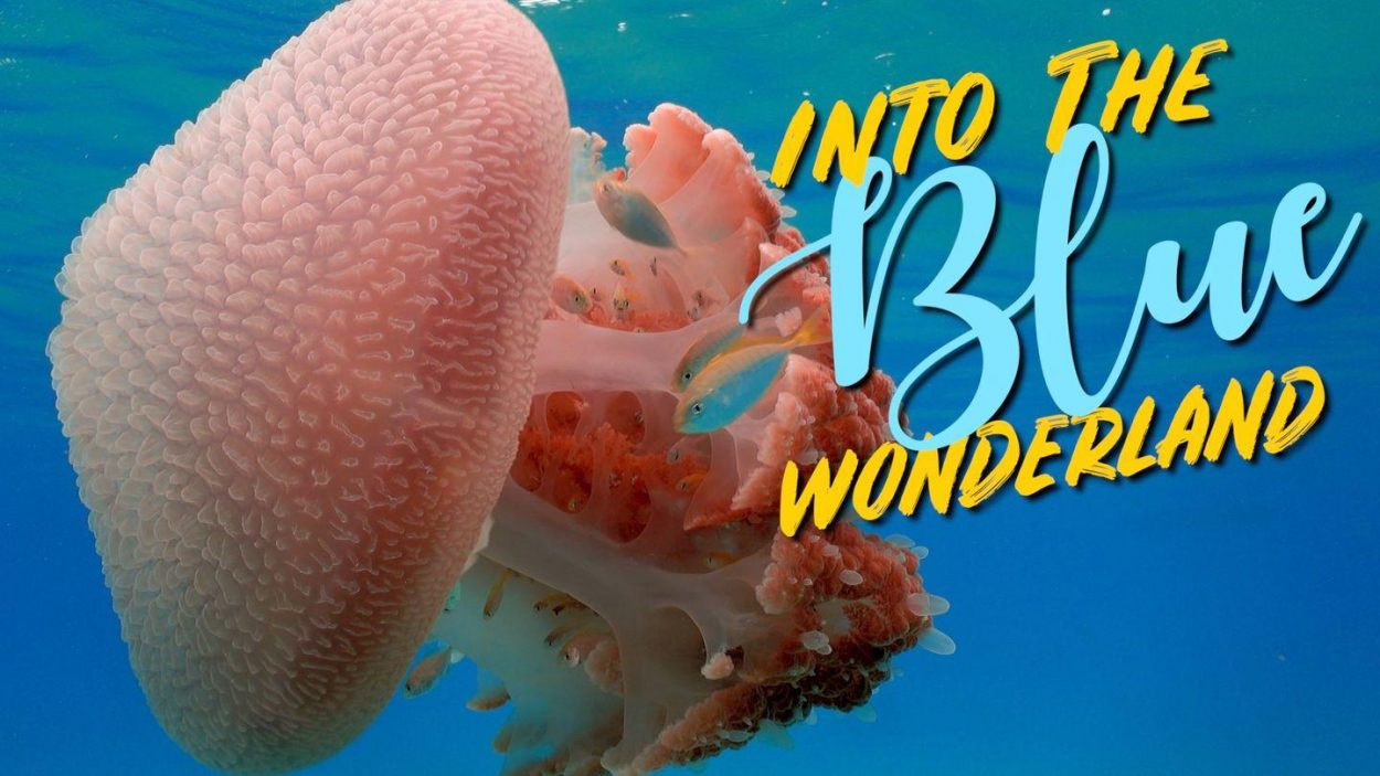 Underwater Photography & Videography by WolFang Digital