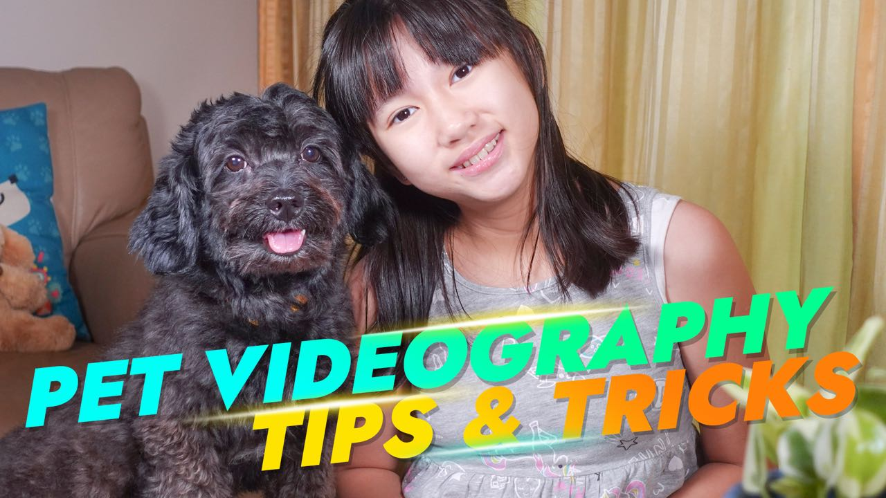 How to shoot pet videos and photos by WolFang Digital